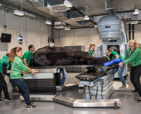 Behandlungstisch für Pferde in der Strahlentherapie