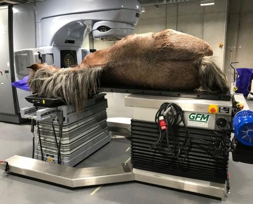 Behandlungstisch für Pferde in der Krebstherapie Strahlentherapie